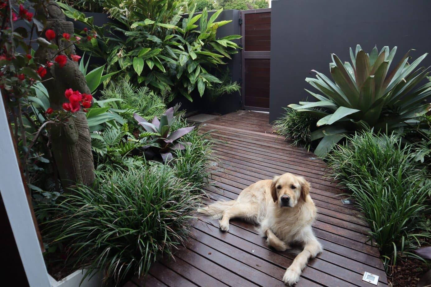 front garden courtyard design - Rose Bay, Sydney