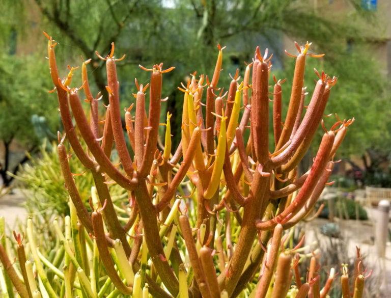 poisonous plants, landscape design Sydney, Vogue&vine